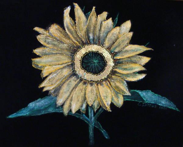 Wall Art - Painting - Black Velvet Sunflower by Chrissey Dittus