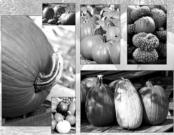 Wall Art - Photograph - Black/white Pumpkins  by Gayle Miller
