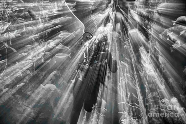 Fish Tank Photograph - Black White Ray Of Light Diver Fish Marine Life  by Chuck Kuhn