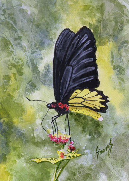 Painting - Black Winged Yellow Fellow by Sam Sidders