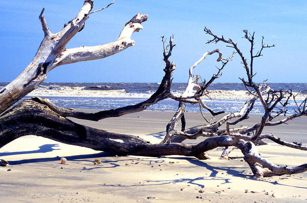 Photograph - Blackbeard Island Beach by Thomas R Fletcher