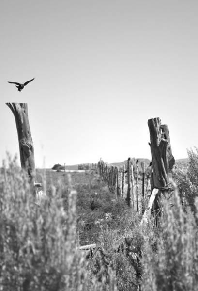 Wall Art - Photograph - Blackbird Fly by Everett Bowers