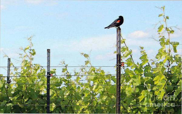 Red-winged Blackbird Photograph - Blackbird Has Spoken by Joe Pratt