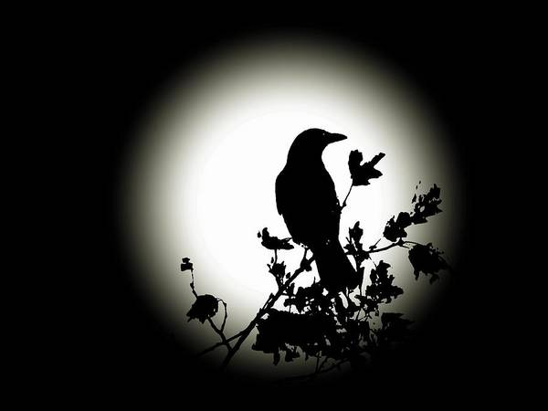 Photograph - Blackbird In Silhouette  by David Dehner