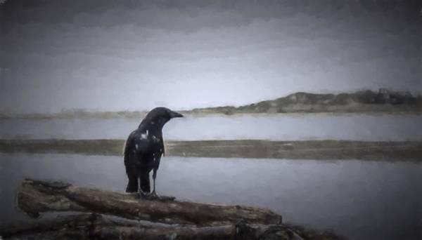 Blackbird Surveys The Bay Art Print