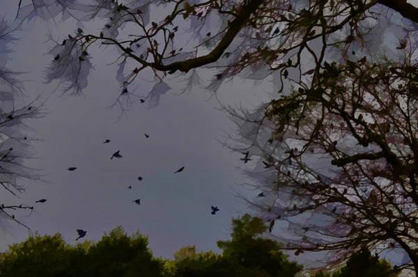 Photograph - Blackbirds Evening Gathering by Lesa Fine