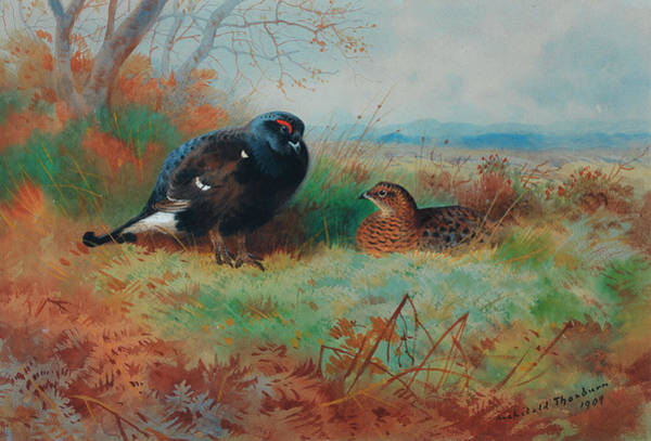 Wall Art - Painting - Blackcock And Hen by Archibald Thorburn