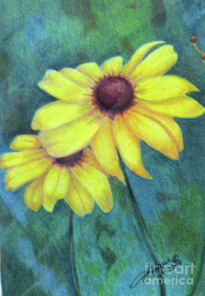 Wall Art - Drawing - Blackeyed Susan by Beverly Fuqua