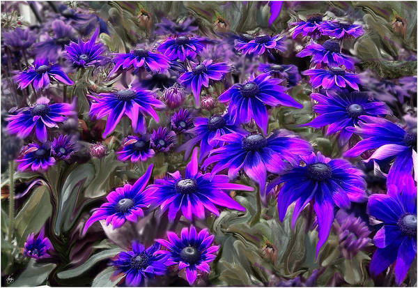 Photograph - Blacklight Moment In The Gloriosa by Wayne King