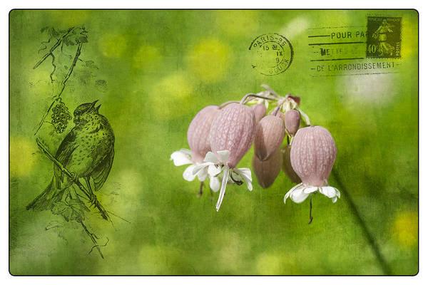 Wall Art - Photograph - Bladder Campion Postcard by Michel Emery