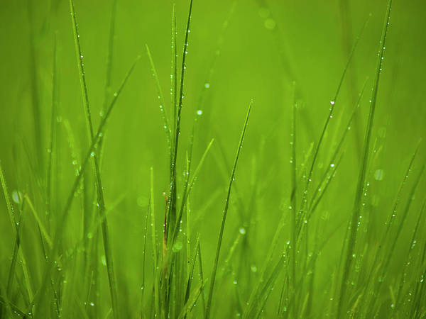 Photograph - Blades Of Grass by Christopher Johnson