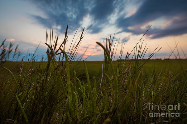 Photograph - Blades Of Sunset by Alissa Beth Photography