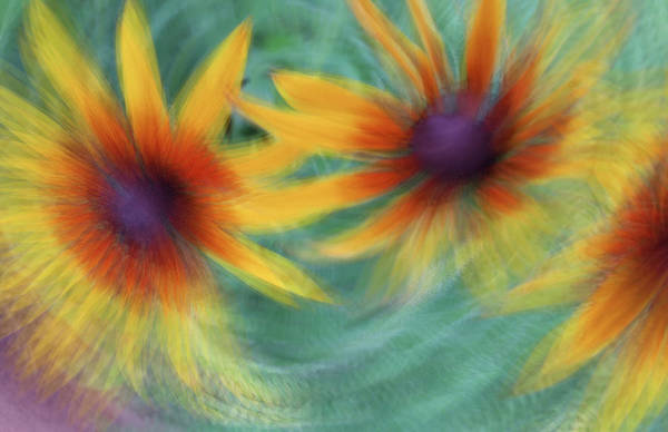 Photograph - Blanket Flower Bingo by Deborah Hughes