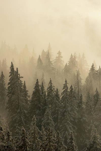 Photograph - Blanket Of Back-lit Fog by Dustin LeFevre