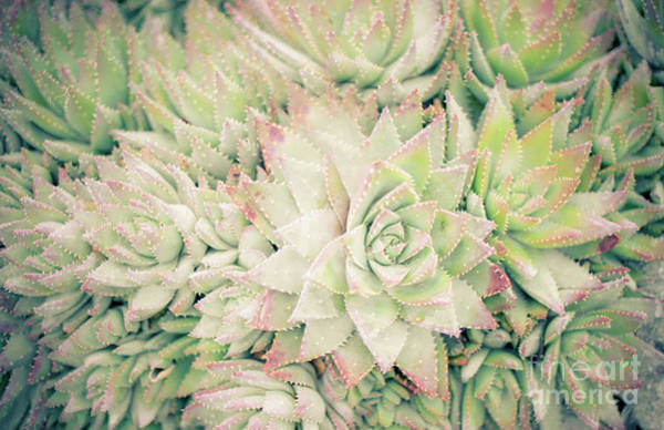 Blanket Of Succulents Art Print