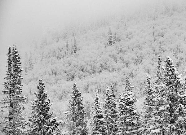 Photograph - Blanketed In White by Rand