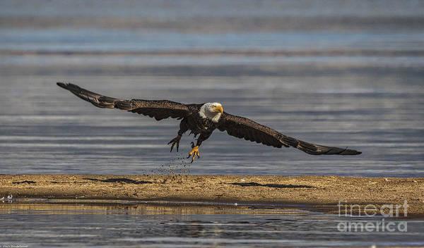Eagle In Flight Photograph - Blast Off by Mitch Shindelbower