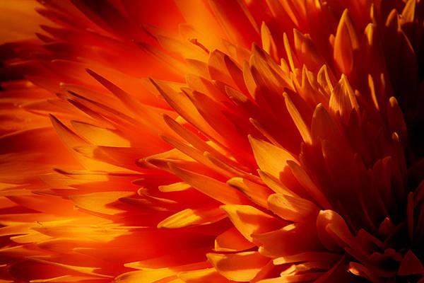 Photograph - Blaze by Dawn J Benko
