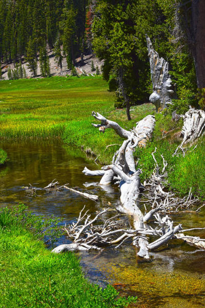 Photograph - Bleached Conifer In Stream by Frank Wilson