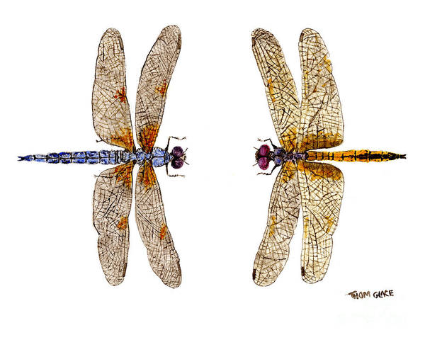 Bleached Skimmer And Hyacinth Glider Art Print