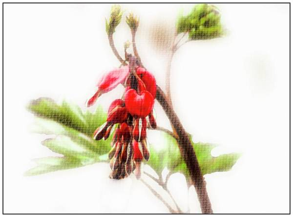 Digital Art - Bleeding Heart Flower by Rusty R Smith