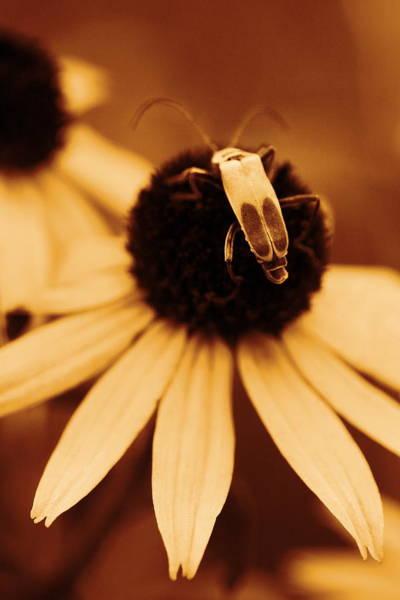 Photograph - Blending by Angela Rath