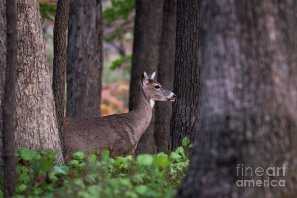 Photograph - Blending In by Andrea Silies