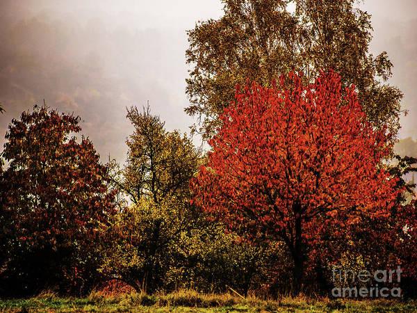 Photograph - Bliesgau_07 by Jorg Becker