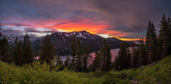 Fallen Tree Photograph - Blinding Light by Brad Scott