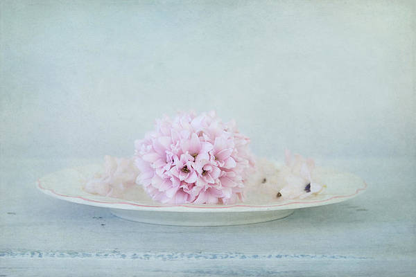 Photograph - Blissful Hyacinth by Kim Hojnacki
