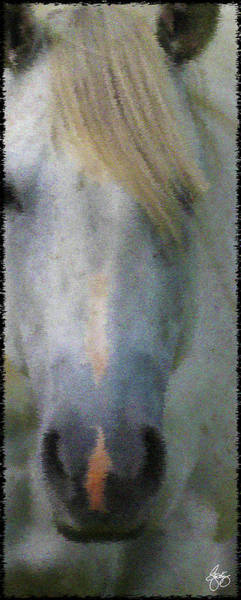 Photograph - Blonde Dreams by Wayne King