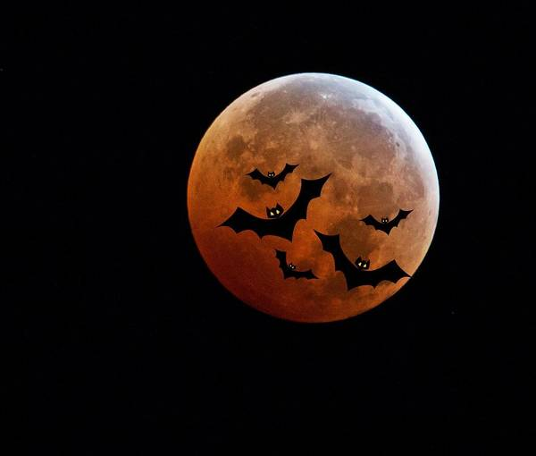 Halloween Photograph - Blood Full Moon And Bats by Marianna Mills