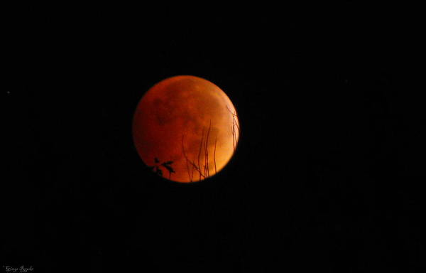 Saint Louis County Photograph - Blood Moon 2014100816 by Ginger Repke