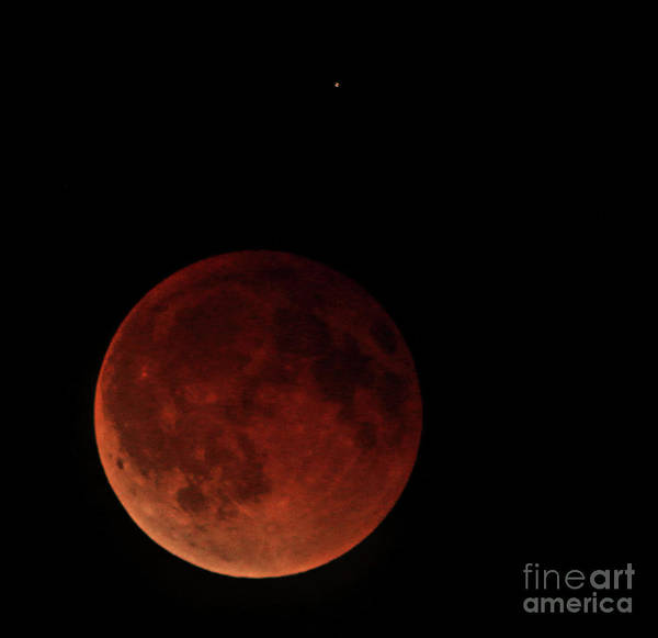 Photograph - Blood Moon Eclipse by Mark Jackson