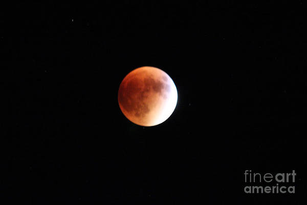 Synchronous Rotation Wall Art - Photograph - Blood Moon From Paonia Colorado  by Dale Jackson