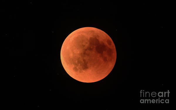 Blood Moon Wall Art - Photograph - Eclipsed by DiFigiano Photography