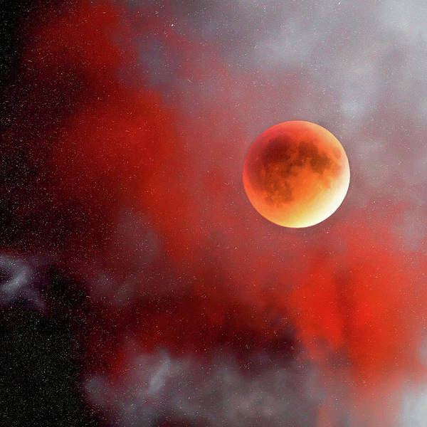 Photograph - Blood Moon by Natalie Rotman Cote