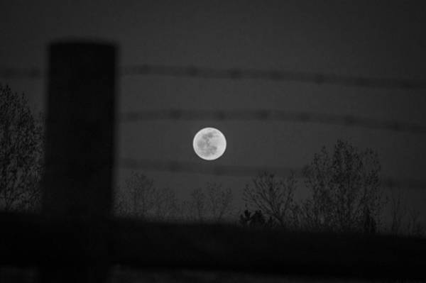 Photograph - Blood Moon by Stephen Holst