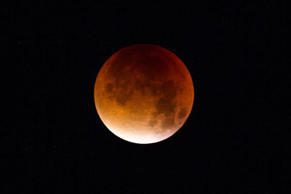 Photograph - Blood Moon Super Moon 2015 by Clare Bambers
