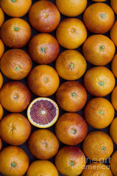 Vegetable Garden Photograph - Blood Orange Fruits by Tim Gainey