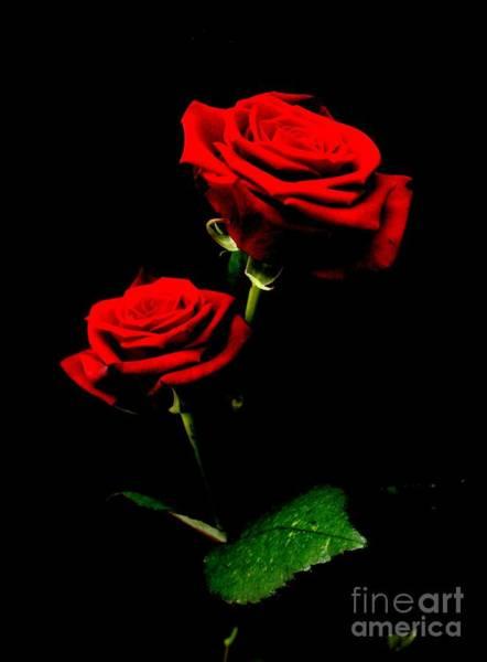 Blood Red Roses Art Print by Valia Bradshaw