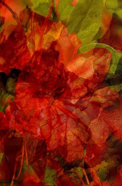Floral Digital Art - Blood Rose by Tom Romeo