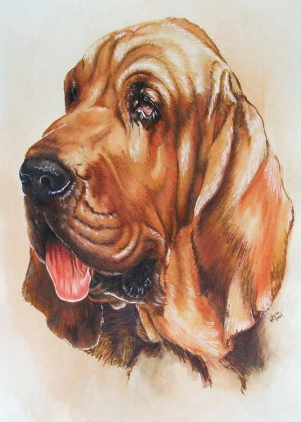 Painting - Bloodhound In Watercolor by Barbara Keith