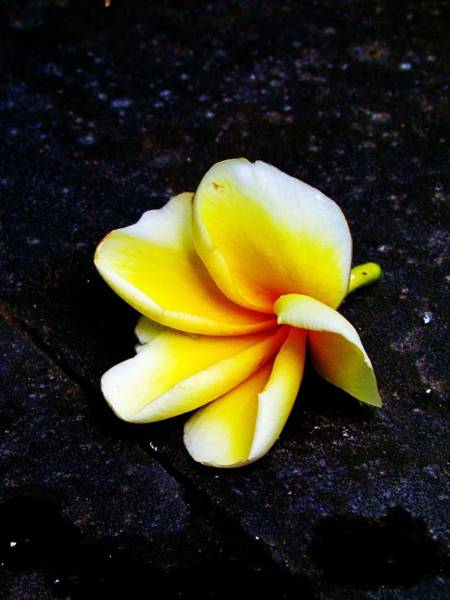 Photograph - Bloom by Duncan Davies