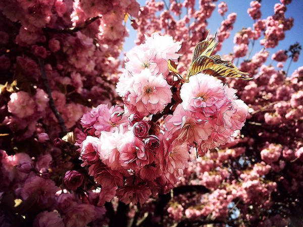 Photograph - Bloom by Natasha Marco