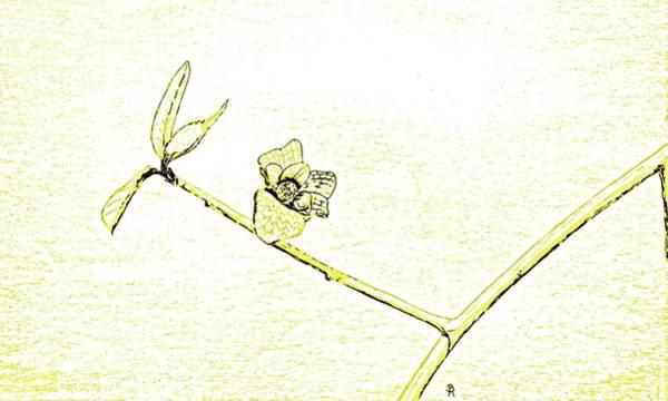 Bloom On Tree Branch Art Print