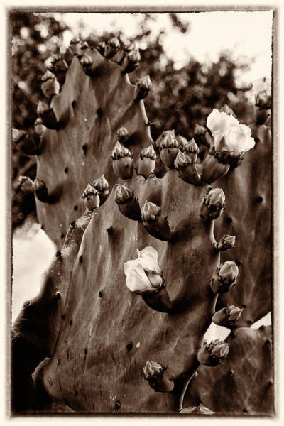 Otp Photograph - Bloom Time by Marshall Barth