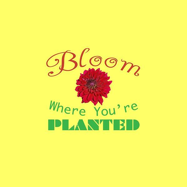 Photograph - Bloom Where You Are Planted 5006.02 by M K Miller