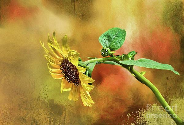 Photograph - Bloomin' Beauty by Susan Warren