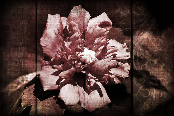 Photograph - Bloomin by Patricia Montgomery